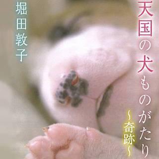 天国の犬ものがたり~奇跡~のイメージ