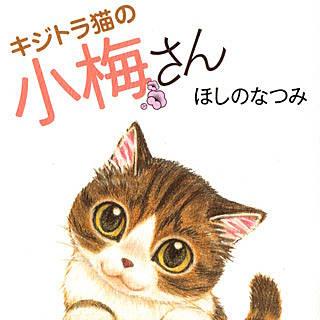 キジトラ猫の小梅さんの画像です。